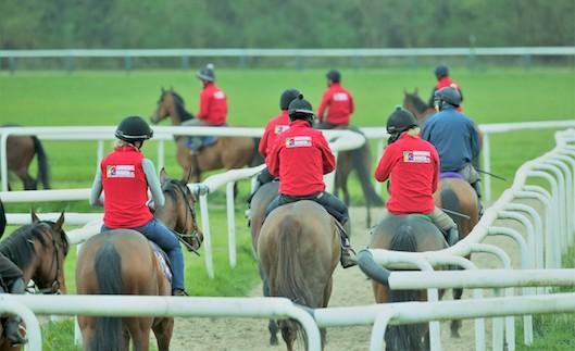 david o'meara team horse racing jobs